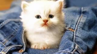 cats, cute cats, funny cats, cats video, cat breeds, cat voice, cat fighting, cat meowing