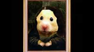 Funny Hamsters 7