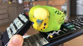 Funny And Cute Parrots – Cutest Parrots In The World 2018