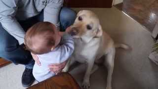 Cute Dog Licks Baby Laughs