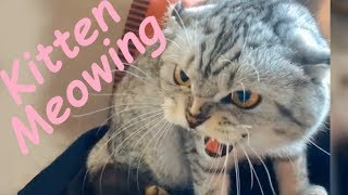 Little Kittens Meowing | Funny And Cute Cats Talking Compilation 2019 Part 4