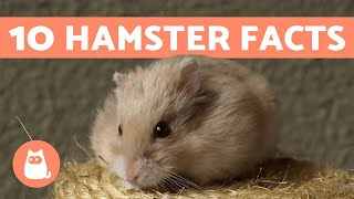 10 Facts About Hamsters – Fun and Helpful Info 💖