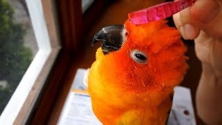 Try Not Laugh Watching Funny Parrots And Cute Birds 2019