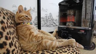 Funny And Cute Cats – Funniest Cats Compilation 2019