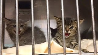 NEW Hissy Feral Kittens Are Finally Here!!!