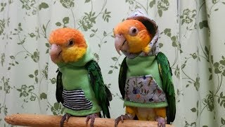 Try Not To Smile Watching Funny Parrots And Cute Birds 2018