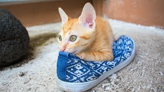 Most Cute and Lovable Cats – Funny Cat Videos – Everything Cats (2019)