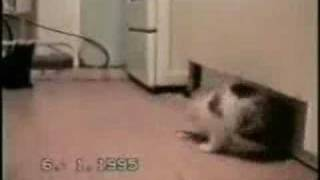 Funny Cats 4