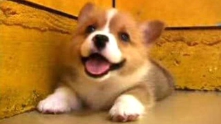 Puppies Barking – A Cute Dogs Barking Videos Compilation [CUTE]
