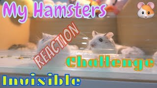 My hamsters reaction to the invisible challenge I LoHa Pet Shop