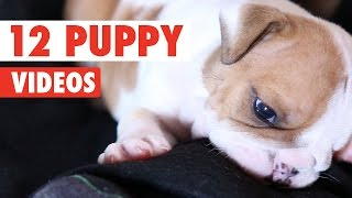 12 Funny Puppies Video Compilation 2016