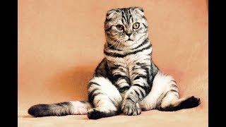 Funny Cute  Cats Video . You would love these Funny Baby Cats Video