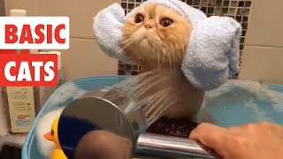Basic Cats | Funny Cat Video Compilation 2017