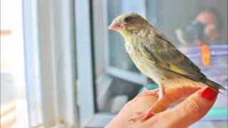 Raising Birdy – How to raise a baby bird. Cutest thing ever!