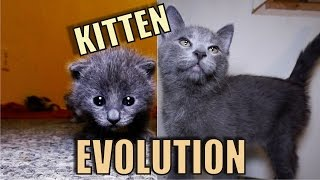 Kitten Evolution – The Gibbyson