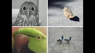 A Small Compilation of Funny Bird Videos