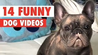14 Funny Dogs Video Compilation 2017