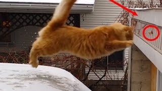 """""""Cats Falling"""" Funny Cats Jumping and Falling 2015 Compilation HD 720p"""