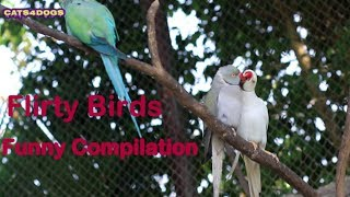 Flirty Birds | Best Funny Birds Video Compilation