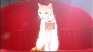 Japanese Commercial with cute Cats – CM Recruit 2016 08 01