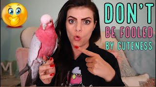 6 Reasons Why You DO NOT Want This Bird in Your Home! (The Real Deal, on Galah Cockatoos)