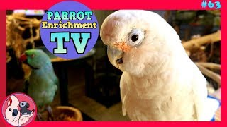 Keep Your Parrot Happy  | TV for Birds | Made By Birbs For Birbs! | Ep: 63