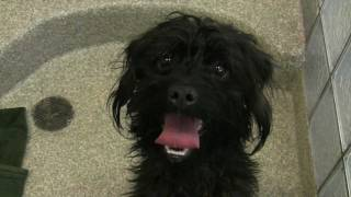 Take Me Home, adoption video, cute cats and dogs waiting to go home with you!