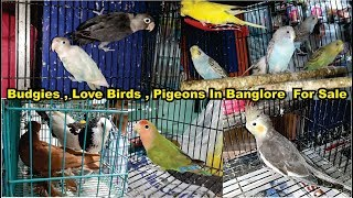 Birds Market Visit With Price Banglore INDIA | Amazing Pet's Market