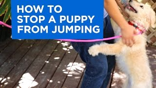 How to Train Your Puppy to Stop Jumping
