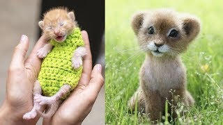 Cutest Baby Animals Videos Compilation Cute Moment of the Animals – Cutest Animals #2