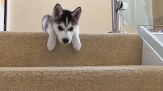 Dogs Falling Down Stairs Compilation