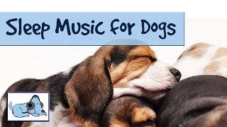 Sleep Music for Dogs and Puppies! Relaxing Music for Dogs by RelaxMyDog – Try today! Amazing!
