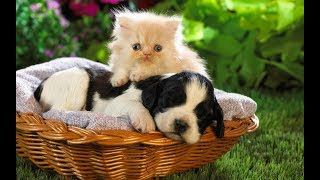 Pet Cute Animals – Top 20 The Funny True Love of Cute Dogs and Cats Compilation 2017