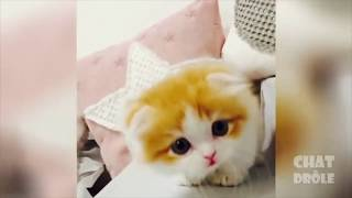 Try not to laugh ! Funny Cats Best of #1
