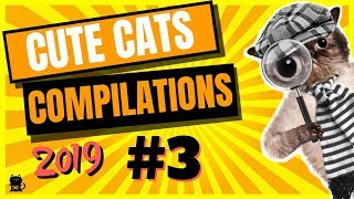 Cute Cats Compilation 2019 – Funny And Cute Cats – Cutest Cats Compilation 2019 #3