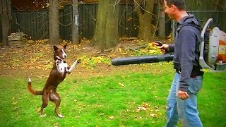 Funny Dogs 🐶🐾Funny Amazing Dogs(Full) [Funny Pets]