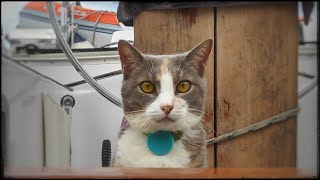 Funny cats video – cat swaying on a sailboat – Millie 03