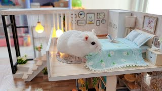Cute Roborovski Hamster Playing In DIY Miniature House Cage – Hamster's Island