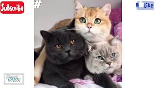 The Best Funny Cats and Kittens Meowing Compilation