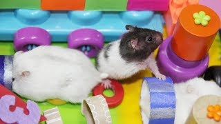 Three Hamsters Running In New Race With Colorful Lego And Balls- DIY Toys For Hamster