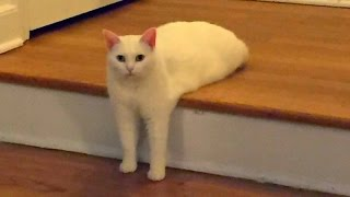 Funny CATS guaranteed to make you laugh – Funny cat compilation