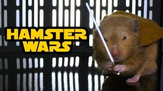 Hamster Wars – 'Star Wars' with Hamsters