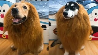 Try Not To Laugh Or Grin – Funny Dogs Fails Compilation 2019 | Funny And Cute Dogs