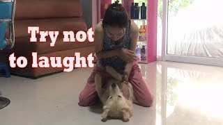 LOVELY SMART GIRL PLAYING BABY CUTE DOGS AT HOME HOW TO PLAY WITH DOG & FEED BABY DOGS #79