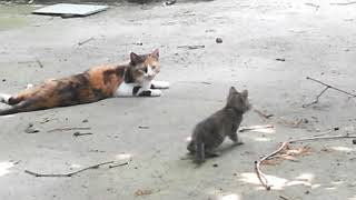 How does Mother Cat protect her cute kittens?