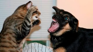 Funny Cats And Dogs Part 7 – Funny Cats vs Dogs – Funny Animals Compilation
