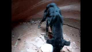 Rescuing Riley, puppy rescued from a 350′ deep slot canyon
