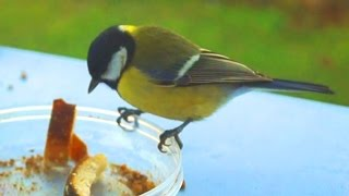 Funny Birds and Bread Crumbs II Spoof