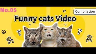 Try Not To Laugh At This Ultimate Funny cats Video Compilation | Funny Pet Videos NO.5