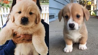 Best Cute Puppies Ever 2019 – Baby Dogs Cute And Funny Dog Videos | Puppies TV